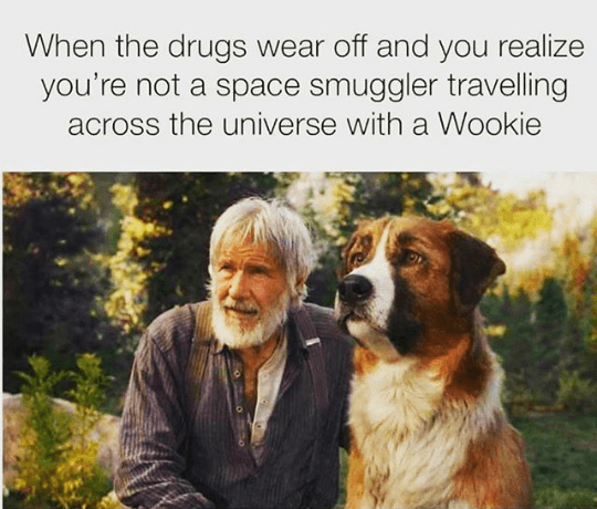 dog-drugs-wear-off-and-realize-not-space-smuggler-travelling-across-universe-with-wookie